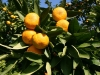 mandarine1058_680