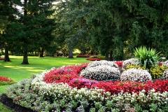 mozirski-gaj-cveti